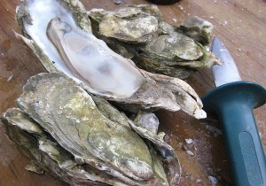 Oysters-300x210