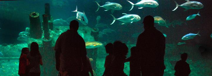 NC Aquariums Shipwreck
