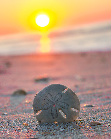 How-to-Find-Sand-Dollars