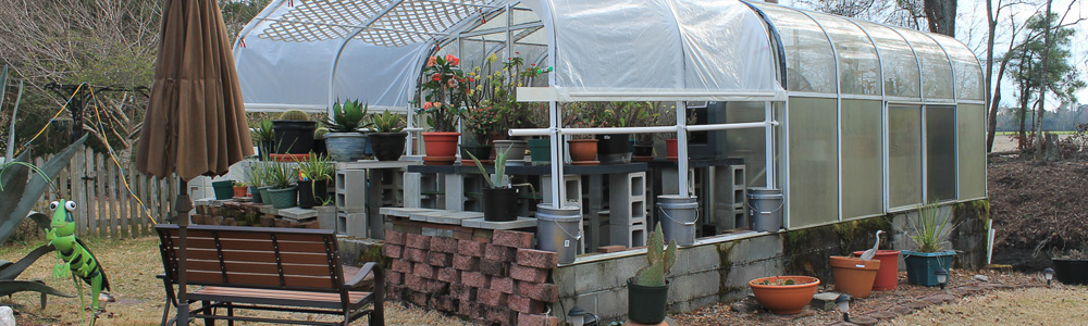 Hobby Greenhouse Spring Plant Sale - Island Life NC on green lavender, green gardening, green butternut squash, green beets, green bonsai, green tulips, green nature, green shrubs, green bushes, green perennial, green garden design, green flowers,