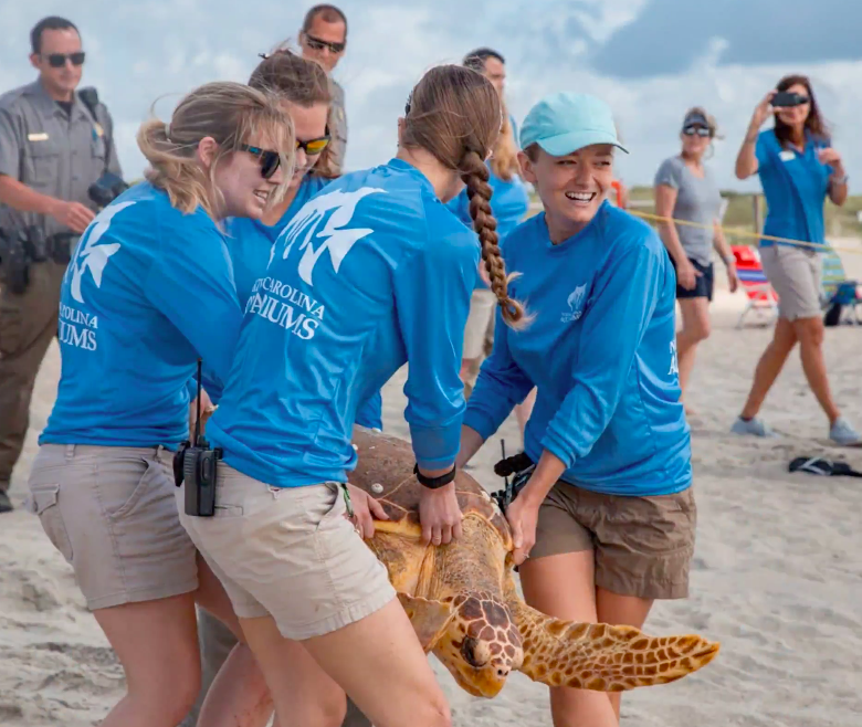 Fort Fisher Sea Turtle Release 1