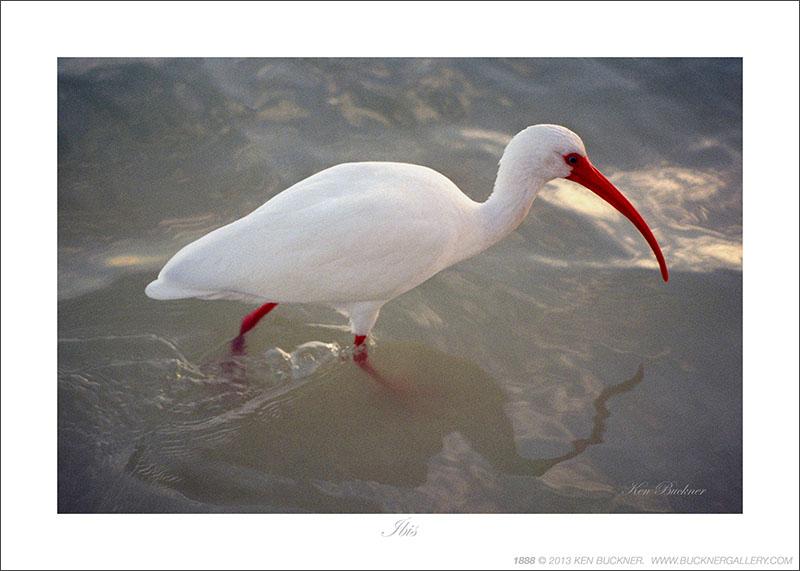 White Ibis Island Sanctuary